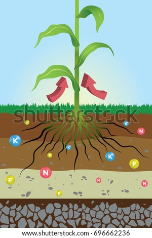 Shutterstock nutrients needed for plants , nitrogen, potassium and phosphorus , fertilizer / main nutrients for plants , root system
