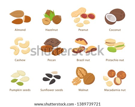 Nuts and seeds in flat design vector set of illustrations. Collection of nuts, seeds icons, infographic elements isolated on white background.