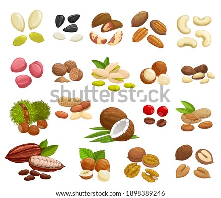 Nuts, beans and seeds vector design of super food. Almond, walnuts, hazelnut, peanut, pistachio, cashew and coconut, pumpkin and sunflower seeds, coffee and cocoa beans, brazil, macadamia, pecan nuts
