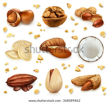 nuts in the shell  vector icon