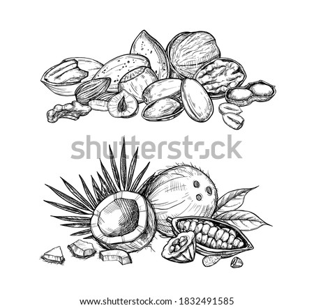 Nuts mix set. Isolated flat almond, hazelnut, walnut, peanut, coconut, cocoa nut mix sketch icons. Natural healthy food collection. Vegetarian diet snack vector illustration