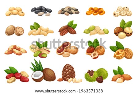 Nuts, seeds and grains icons vector set. Cola nut, peanut, sunflower seeds, pistachio, cashew, coconut and hazelnut. Macadamia, almond, corn nuts, nutmeg, chestnuts or chufa tigernuts and ets.