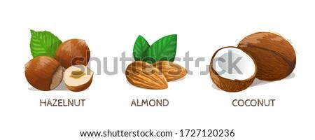 Nuts set: Hazelnut, Almond, Coconut. Vector Illustration. Foto d'archivio ©