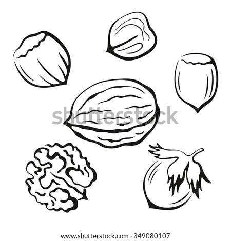 nuts set  walnut and hazel