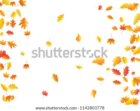 Oak and maple leaf beautiful background seasonal vector illustration. Autumn leaves falling graphic design. Fall season specific vector background. Oak and maple tree dry autumn yellow orange foliage.