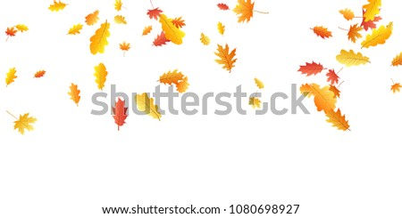 Oak and maple leaf cool background seasonal vector illustration. Autumn leaves falling graphic design. Fall season specific vector background. Oak and maple tree dry autumn yellow red foliage.
