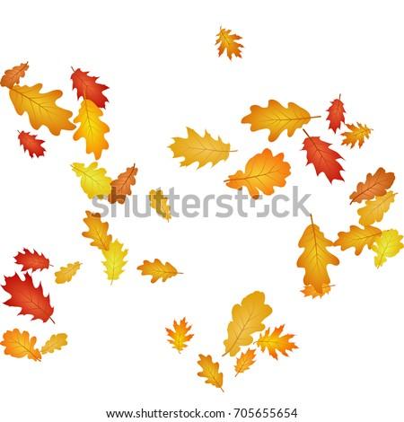 Oak leaf abstract background seasonal vector illustration. Autumn leaves falling graphic design. Fall season specific vector background. Oak tree autumn foliage on white.