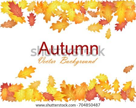 Oak leaf border abstract background seasonal vector illustration. Autumn leaves falling frame graphic design. Fall season specific border vector background. Oak tree autumn foliage on white.