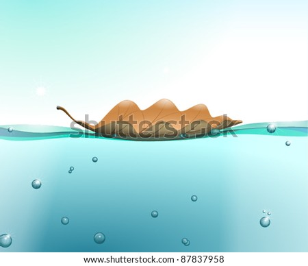 oak leaf on the water surface