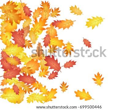 oak leaves flying confetti