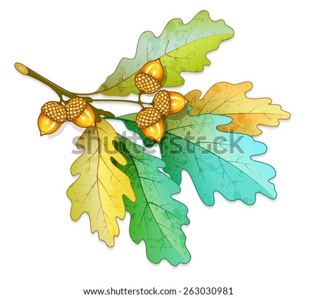 oak tree branch with acorns and