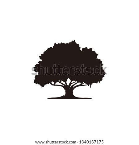 Oak tree icon vector ストックフォト ©