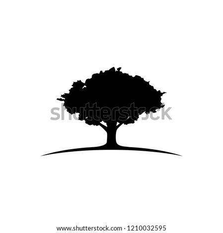 oak tree logo image