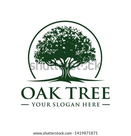 Oak tree logo template vector ストックフォト ©