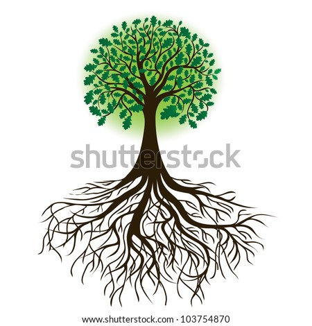 oak tree with roots and dense foliage, vector image