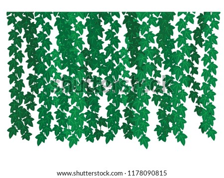 Object Silhouette Ivy Leaves The Plant Of On White Background