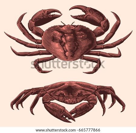 ocean crabs. design set. hand...