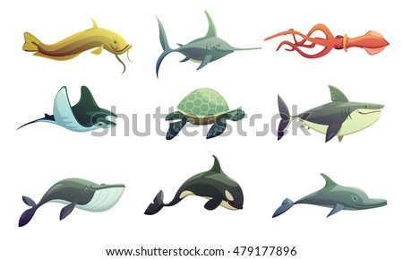 ocean underwater animals