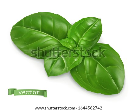 Ocimum, cooking basil. 3d realistic food illustration. Vector object