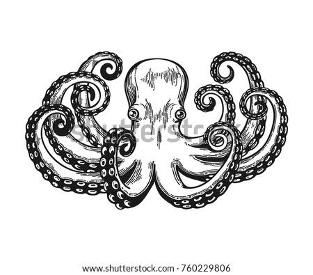 octopus engraving vintage