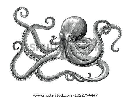 Octopus hand drawing vintage engraving illustration on white backgroud - Shutterstock ID 1022794447