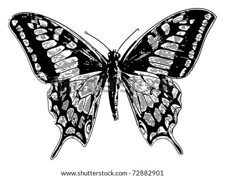 Old engraved illustration of a old world swallowtail or papilio machaon, isolated on white. Live traced. From the magazine Le Magasin Pittoresque, Paris, 1845.