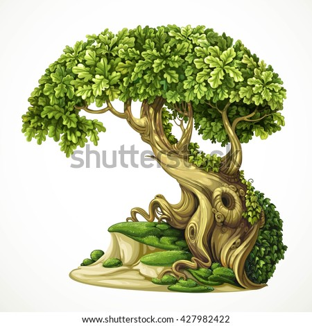 old fairy ivy covered oak tree