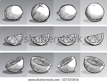 Old fashioned etched style illustration of various citrus fruit, depicted whole, sliced into a wedge, and sliced in half, all in black and white.