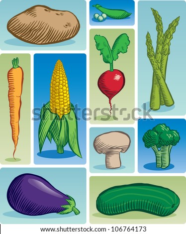Old fashioned etched style illustration of various common vegetables. - stock vector