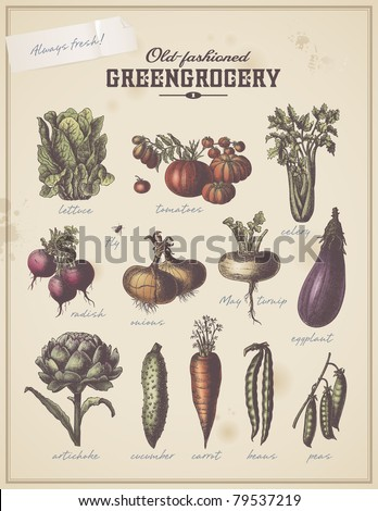 old-fashioned greengrocery - vintage collection of different vegetables (set 1) - stock vector