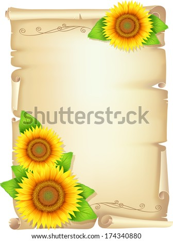 Old scroll with sunflower yellow flowers sunflower with leaves, holiday background