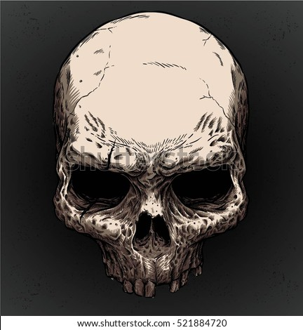 old skull vector with editable