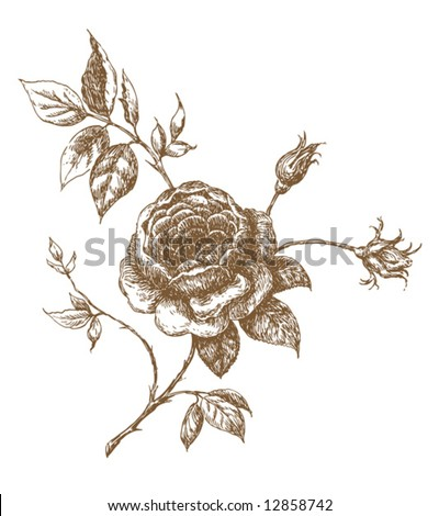 old-styled vector rose - stock vector