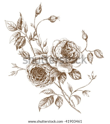 rose drawing outline. hairstyles Flower Parts - Image 8 rose flower drawing.