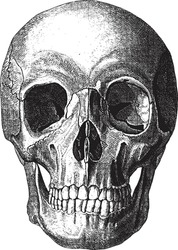 Old-time engraving of the Skull