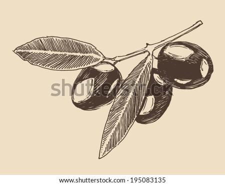 olive branch  olive tree