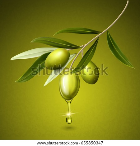 olive fruits and leaves on a