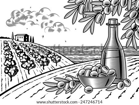 olive harvest landscape black