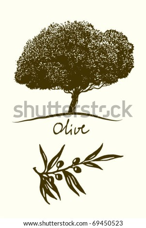 Olive oil (tree, branch)