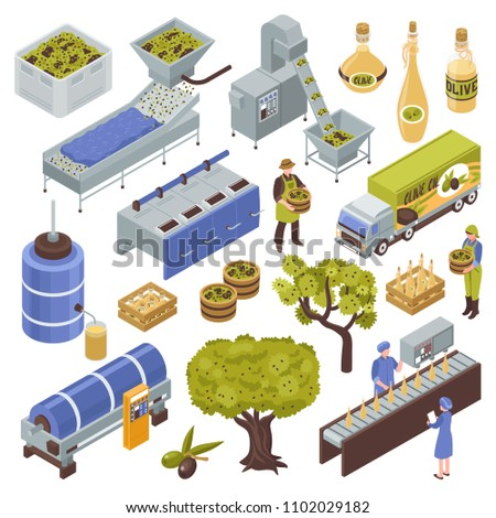 Olive production process isometric set with fruit harvesting transportation oil extraction filtering storage packing distribution vector illustration