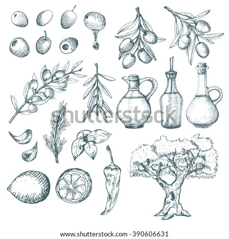 Olive products and supplements sketch. Simple vintage illustrations.