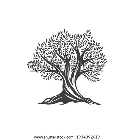 Olive tree icon, olives, leaves and branches in vector flat line. Olive tree sign for extra virgin olive oil, Mediterranean cuisine, Greek and Spanish vegetable food product symbol