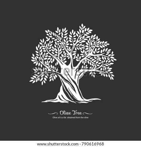 Olive tree. Nature. Vector silhouette illustration. Organic food.