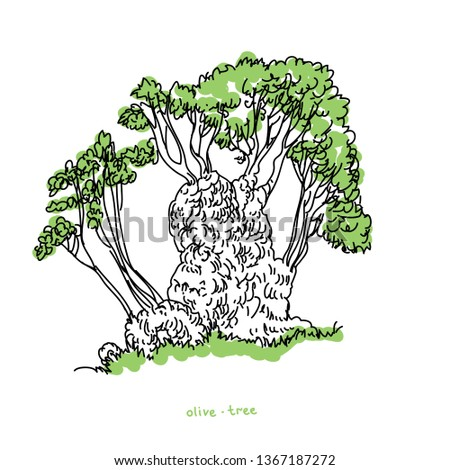 Olive tree vector illustrations for illustrate any nature or healthy lifestyle topic.