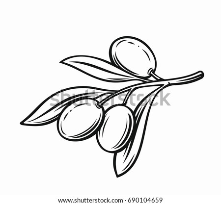 olive with leaves vector label on white background