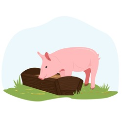 On a farm, a piglet eats hay from a trough. Country pet. Pig character isolated on white background. Vector illustration in flat style