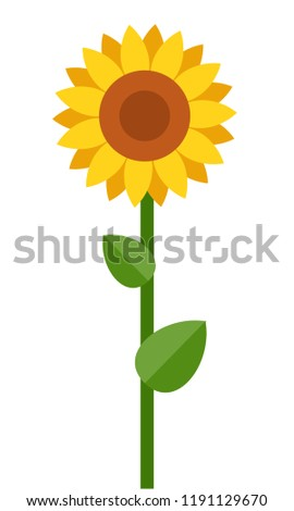 one blooming sunflower vector