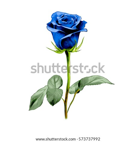 one blue rose vector