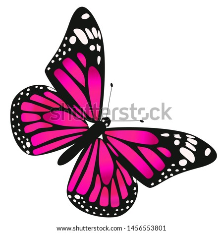 one butterfly is dark pink in