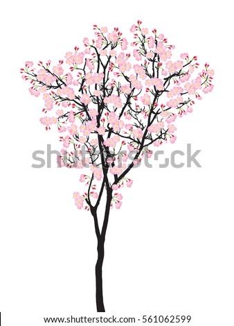 one full bloom pink sakura tree